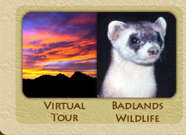 Virtual Tour/Badlands Wildlife
